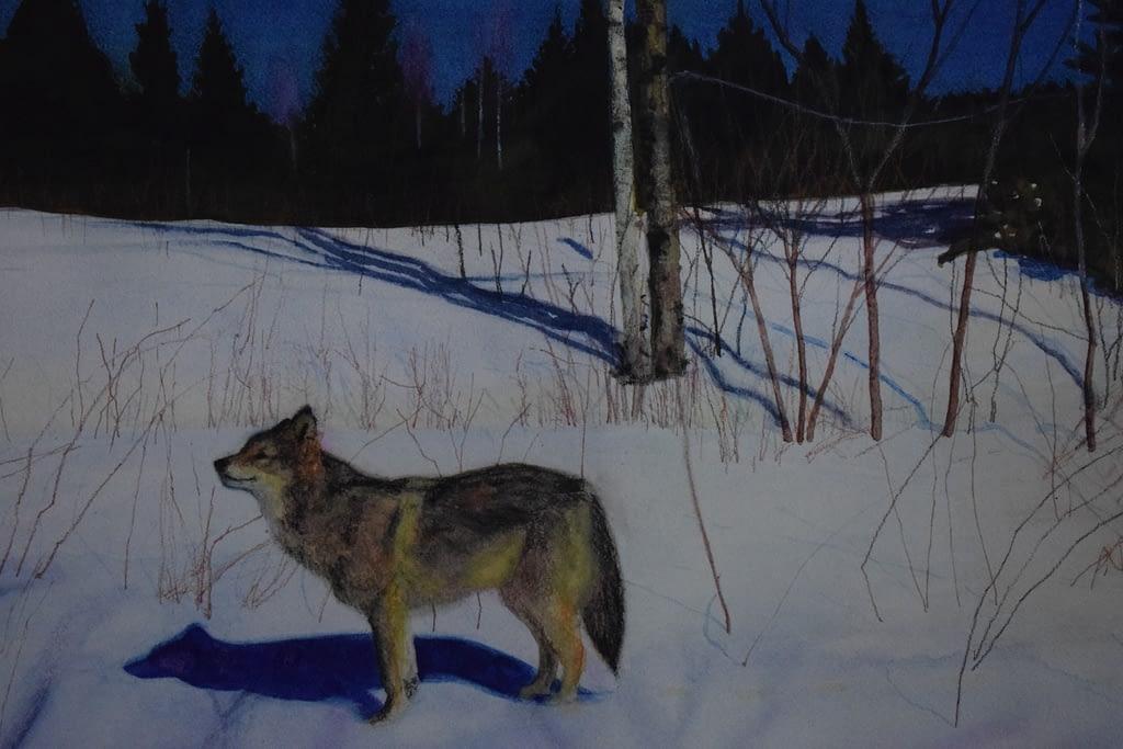 Veera Tammisen maalaus susi keväällä. Painting of Veera Tamminen, wolf in spring